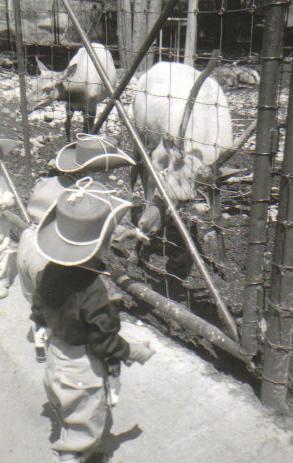 Cowpokes at the zoo