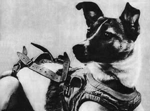 Laika_(Soviet_dog)